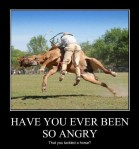 Have you ever get so angry Tackled a Horse