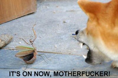 Cool kung fu Mantis